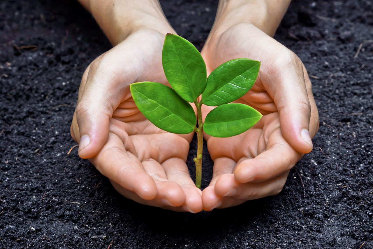 nurturing a plant to represent benefits to society